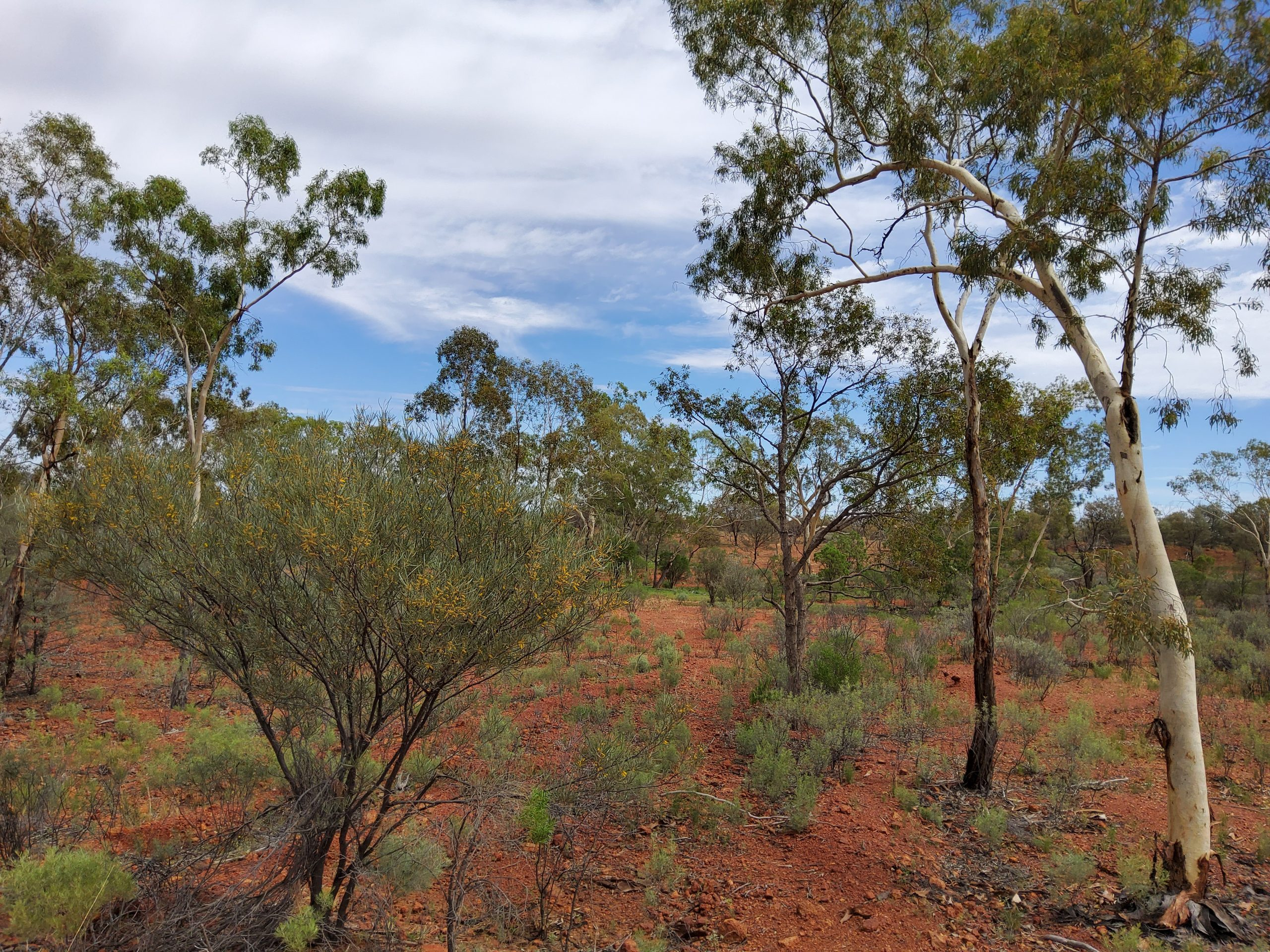 What are the benefits of revegetation living