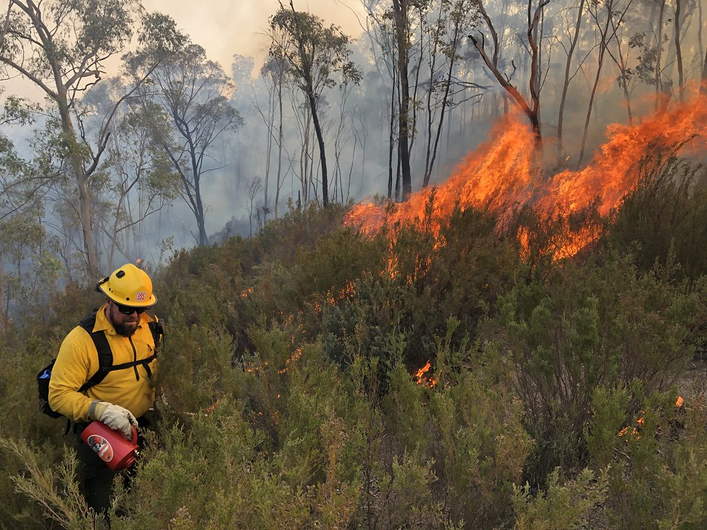 How bush fires affect our environment
